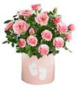 Pink roses flower arrangement in Pot:  same day delivery available