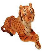 Send Soft Toy with Tiger to Chennai Delivery.