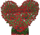 250 Red Roses Flowers in Heart Shape Arrangement to Chennai Delivery