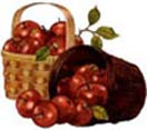 2kgs. Apple Basket to Chennai Delivery