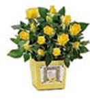 Corporate Gifts with 24 Yellow Roses in a Ceramic Pot to Chennai Delivery