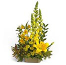 Sunshine Flowers Basket to Chennai Delivery