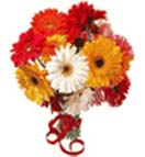 Holi Gift with Mix Gerbera Bouquet to Chennai Delivery