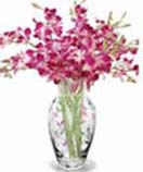 Orchids in a Vase for Condolence to Chennai Delivery