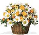 New born Gifts with Roses and Daisies Basket to Chennai Delivery