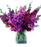 Wedding Gifts with 10 Stem Orchids in Vase to Chennai Delivery